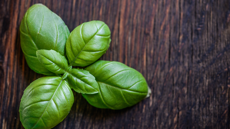 Cultivation settings and strategy for lettuce and basil