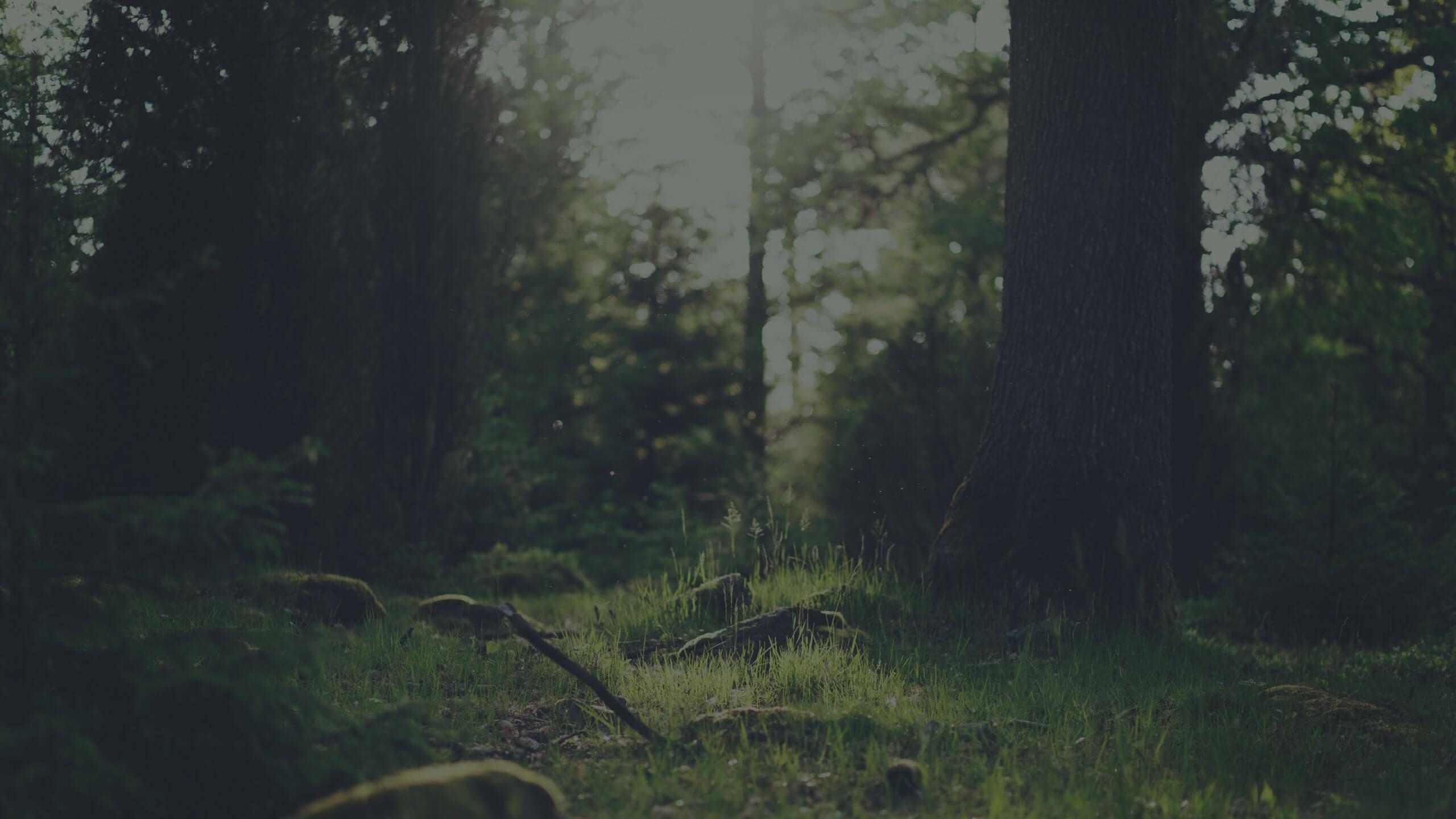 Postcode Groen | Ripplestarters